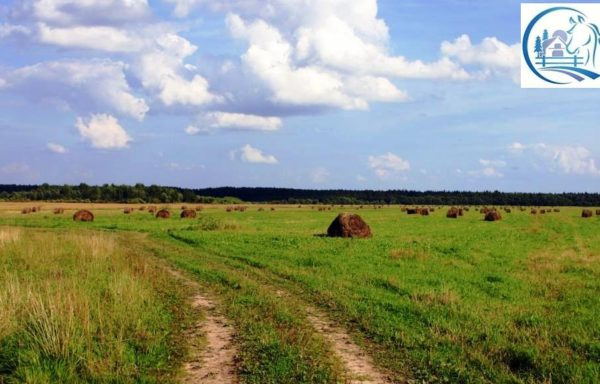Farmland for sale in Russia – Tver region 80000 hectares (200000 acres)