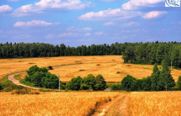Land for sale in the Penza region with an area of 12 000 hectares (30 000 acres)