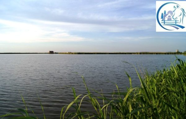 Pond farm with fish for sale in Russia – 135 hectares (338 acres)
