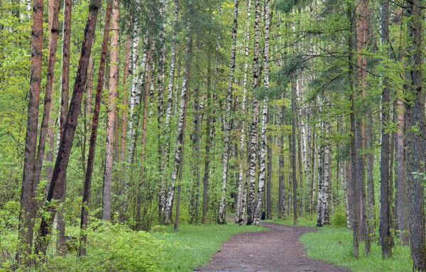 Forest land for sale in Russia (Tver region) – from 400 to 4 000 hectares