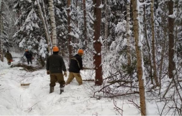Timber trade in Russia (the business of timber harvesting)