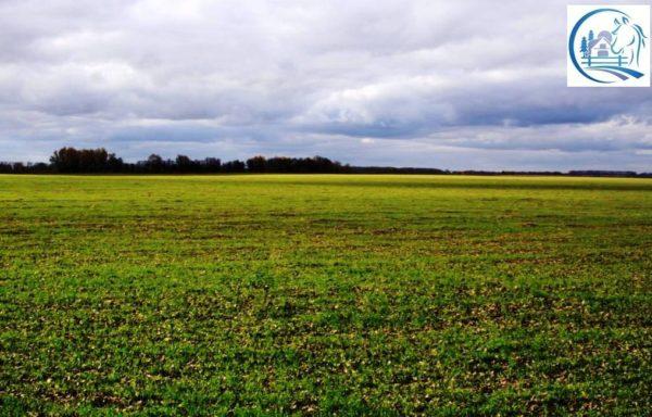 Sale of 18 300 hectares in Russia – Krasnoyarsk region