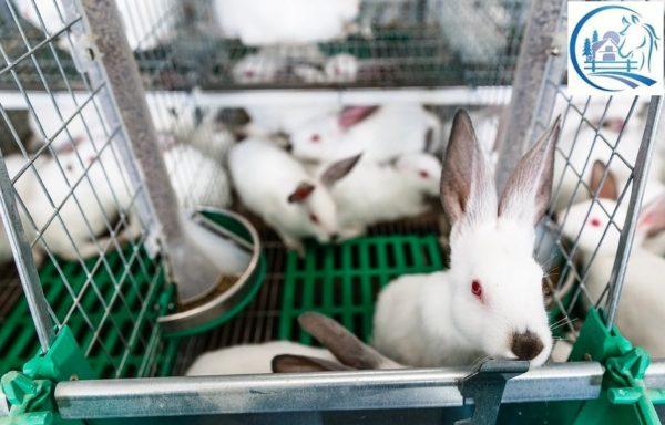 Rabbit farm for sale in Russia