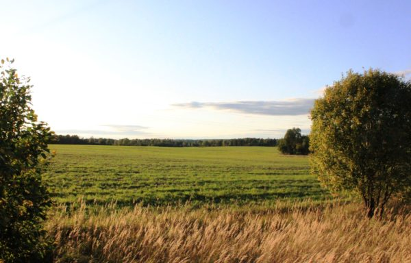 Land for sale 3 000 hectares in the Smolensk region
