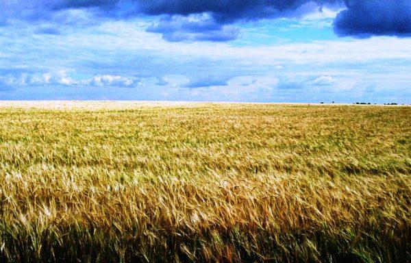Farm for sale in Russia – Saratov region – 6593 hectares