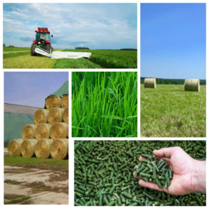 Sale of land plots with the creation of a hay production business in Russia